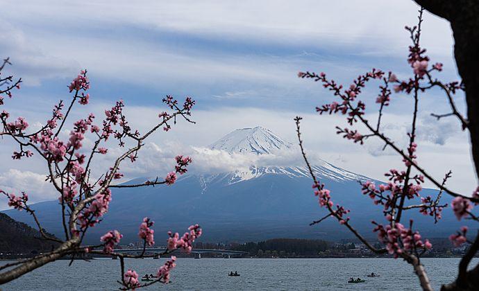 Circuit Japon : Floraison des cerisiers à Kawazu   Evaneos