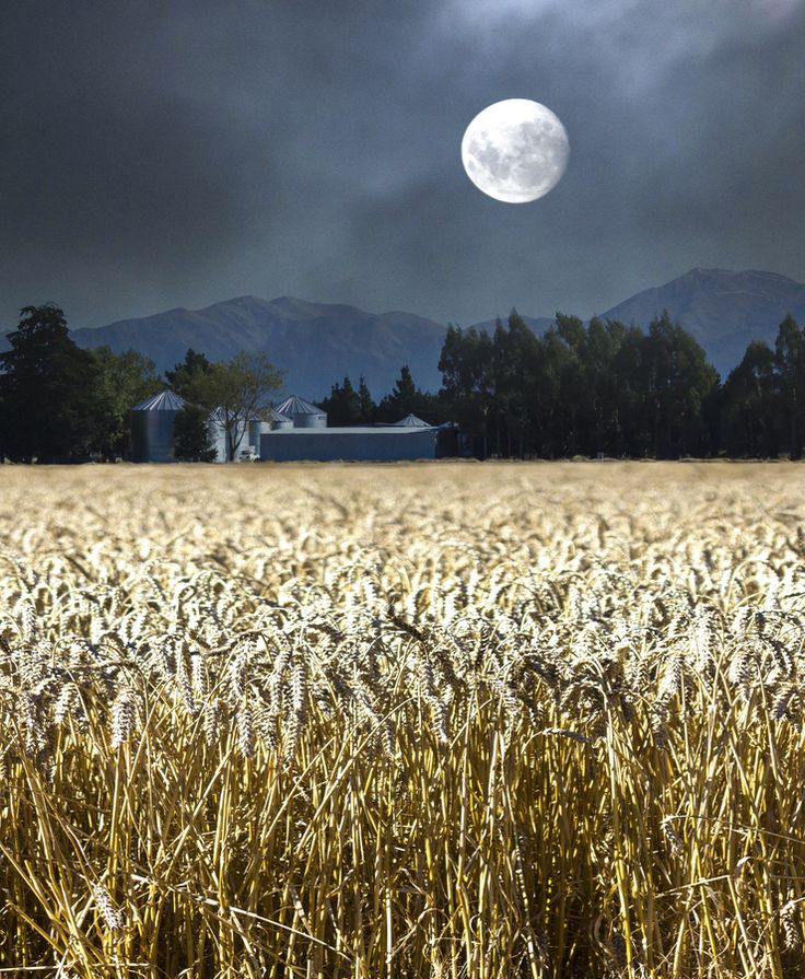 "❦ ""harvest moon""   mary wethey. [ "" Oh, Shine on, shine on, harvest moon Up in the sky; I ain't had no lovin'....""]"