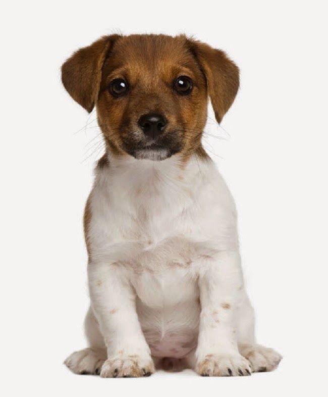 #Reakcje #poszczepienne u #psa