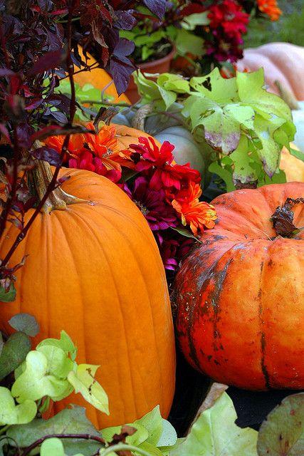 Picking pumpkin time