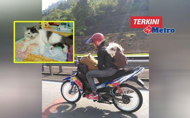 Twiny memang suka naik motor duduk atas bahu saya  Kucing ini sangat manja sampai makan minumnya perlu bersuap buang air perlu diteman   TWINY memang suka naik motor duduk di atas bahu saya kalau letak di bakul motor dia akan lari ke belakang saya semula.  Twiny memang suka naik motor duduk atas bahu saya  Kucing ini sangat manja sampai makan minumnya perlu bersuap buang air perlu diteman  Itu kata Ahmad Mukhriz Shah Ahmad Kamal 23 selepas gambarnya menunggang motosikal di lebuh raya sambil…