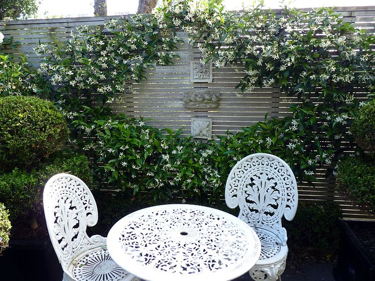 Garden Design Hedges 90 best thorndon ~ designedhedge images on pinterest | formal