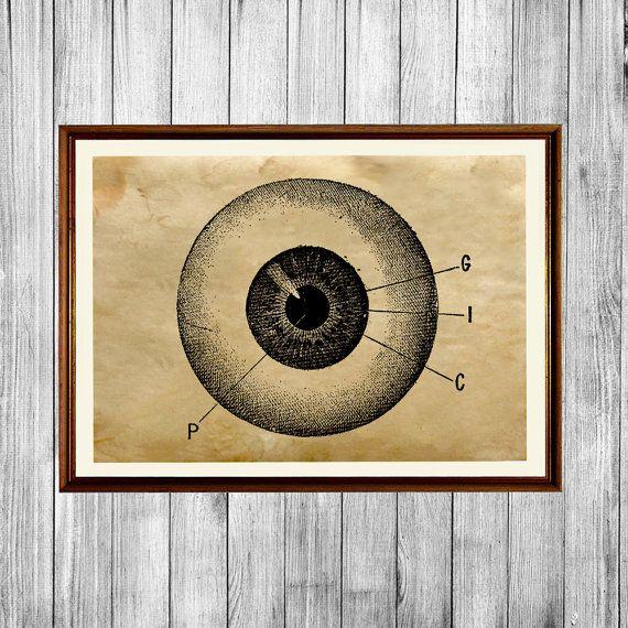 Ocular Anatomy Coloring Book : Best 25 eye anatomy ideas on pinterest face human eye