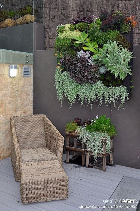 varied plantings with draping in large vertical garden feature on a patio
