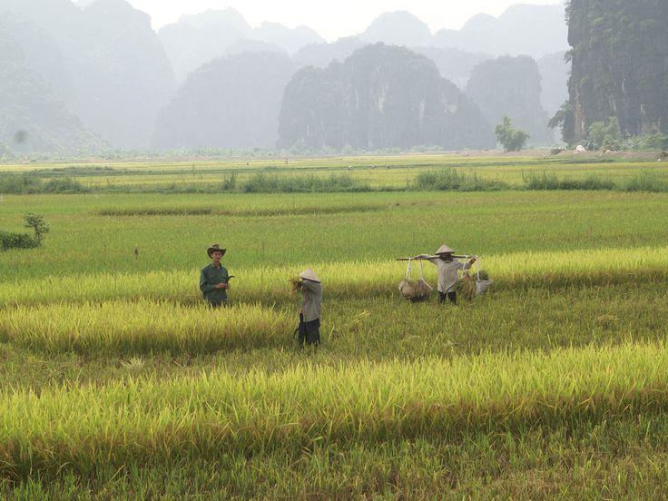 vietnam trockene halongbucht
