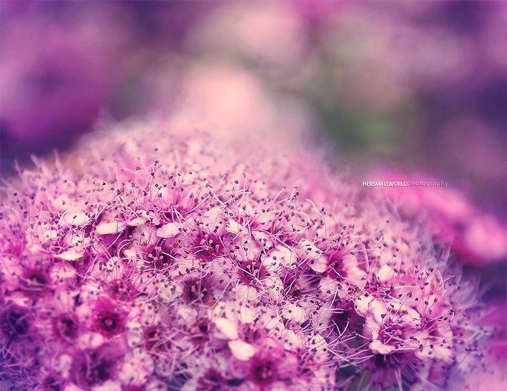 livraisons de fleurs pas cher  400 #fleurs #bouquet