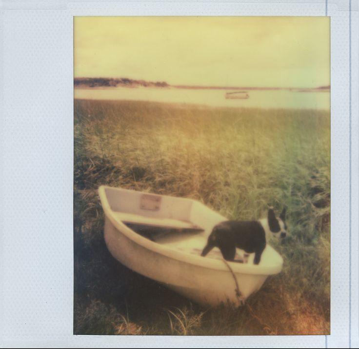 Pancake the Mancake.   Camera: Polaroid Spectra   Film: Impossible Project PZ. (dog photography)