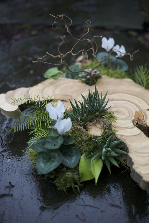 161 Best Images About Aa Moss And Birchbark On Pinterest