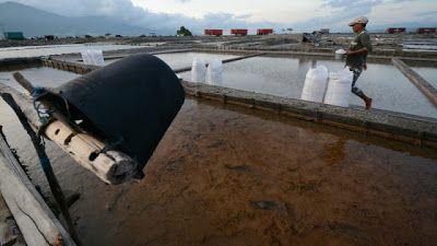 Indonesia Punya Laut Luas Kenapa Masih Impor Garam?