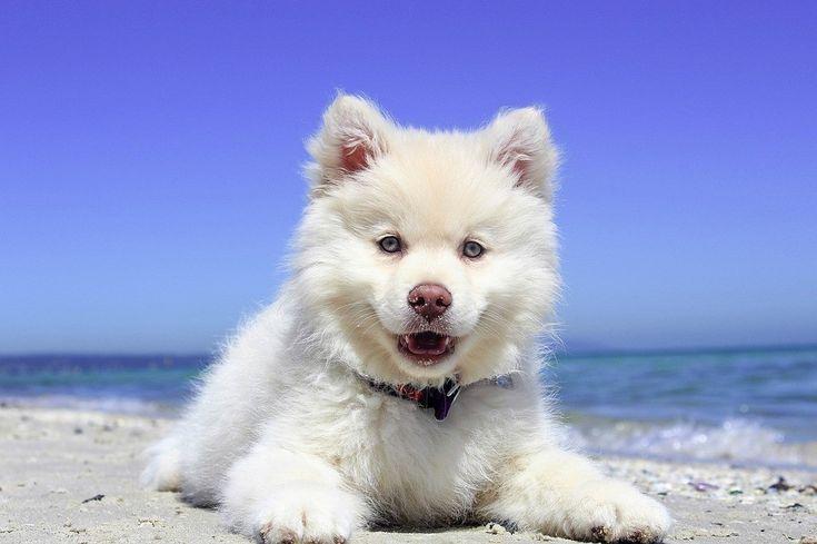 Por que os cachorros são bons companheiros? A resposta está nos genes. Pesquisa mostra ainda que cãezinhos de rua são ainda mais amigáveis que os domesticados