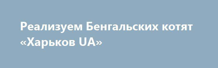 Реализуем Бенгальских котят «Харьков UA» http://www.mostransregion.ru/d_124/?adv_id=1112  Бенгальские котята. Питомник Jaguar's Blood предлагает девочку отличного класса. У кошечки крупная контрастная розетка, титулованные родители, весь пакет документов. Выращена в семейной обстановке с заботой и любовью, привита и приучена к порядку.