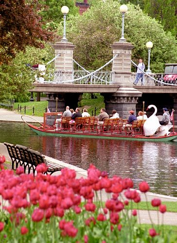 Boston - Public Gardens - Swan Boat & Tulips