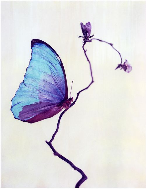 Purple blue~Not an oximoron...what fragile strength looks like!