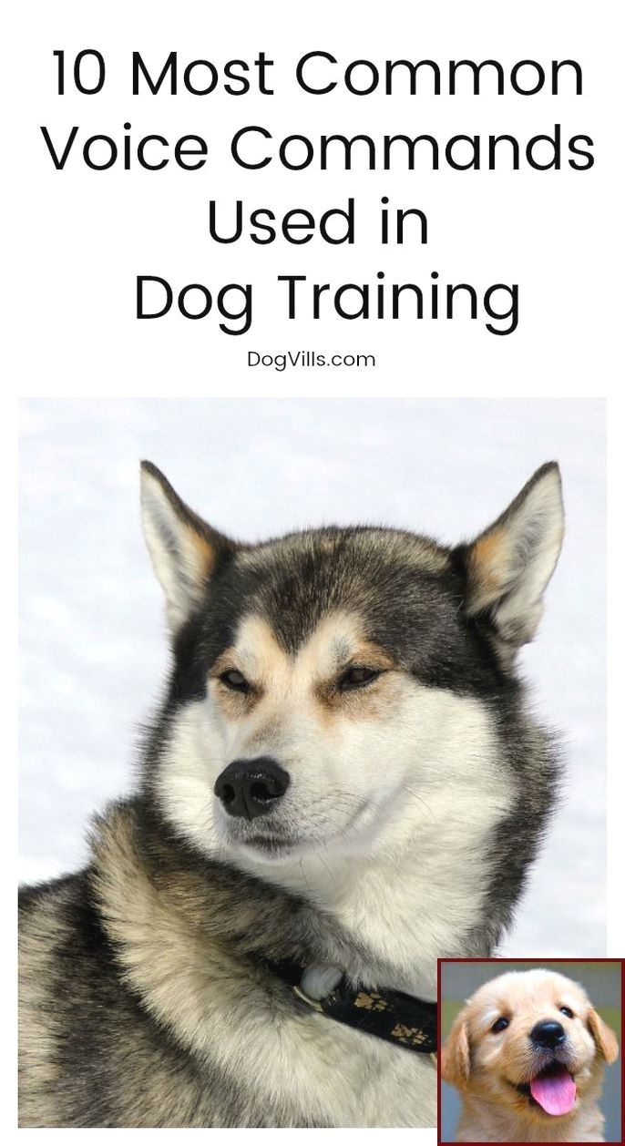 House Training A Puppy Services And Clicker Training Hunting Dogs