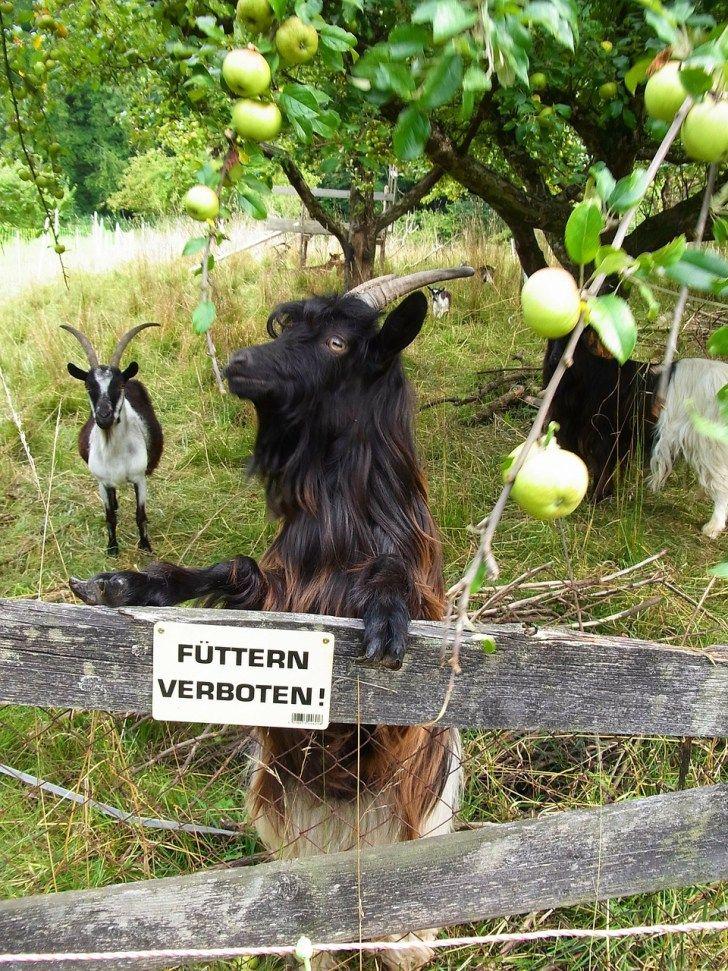 Die Streuobstwiese - Wertvolles Ökosystem und Lieferant für Obst und Saft in der Selbstversorgung ...