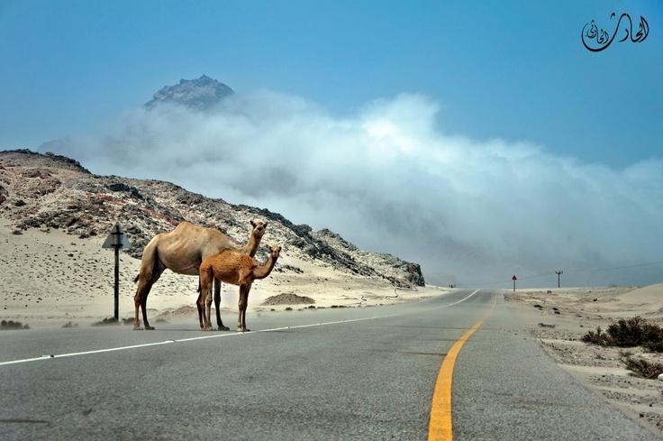Destination ✈ Middle East