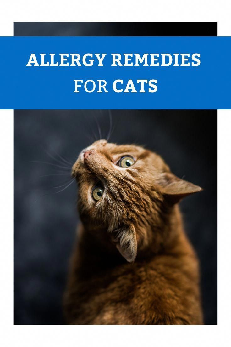 Allergy Remedies For Cats Dog Sneezing And Itching Itchy Doggy Dog Sneezing And Itching Dog Scratching Due To Str In 2020 Cat Names Animal Books Cat Allergies