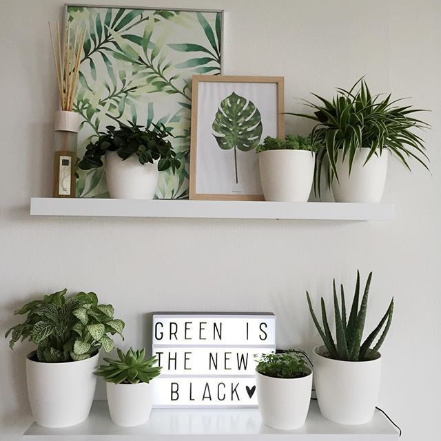 Nieuwe planken / Got new wall shelves #plants #plantsofinstagram #plantlife #plantslover #greenthumb #greenliving #greenlife #urbanjungle #interior #interiordecor #interior4all #interiordesign #groen #groeninhuis #groenevingers #witwonen #vtwonenbijmijthuis #wooninspiratie #kwantum #homedeconl #rituals #aloevera #vetplanten #lightbox