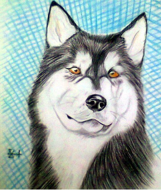مجرة الفنون أجمل 55 رسم بالرصاص في 2012 رسومات بقلم الرصاص و الفحم رائعة Drawings Animals Dogs