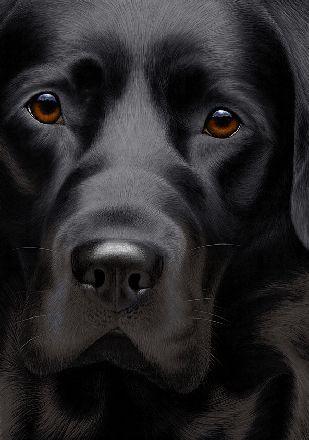 LABRADOR – Who can resist a lab puppy?! ❤ Artist Nigel Hemming