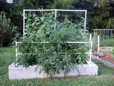 Square Foot Gardening Using Cinder Blocks Loose The Pvc It S Not Food Safe