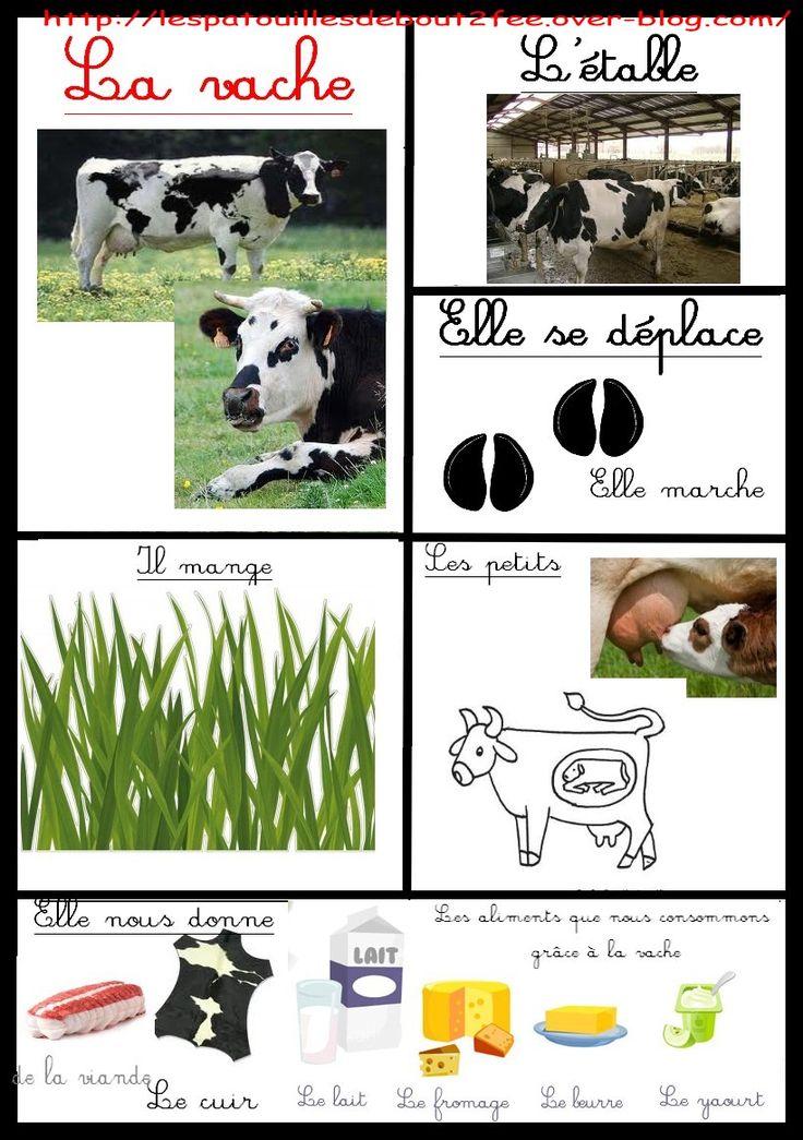fiche d'identité de la vache