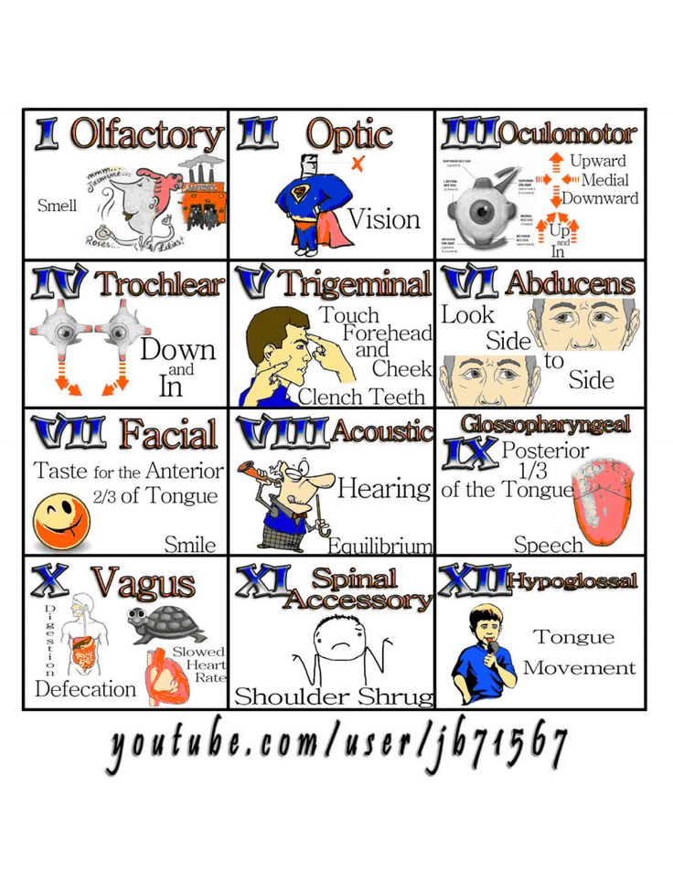 Oh oh oh to touch and feel a girls vagina simply heaven!!! 12 cranial nerves mnemonic