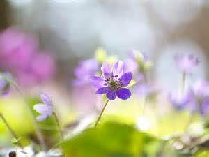 春の風景 - Yahoo Image Search Results