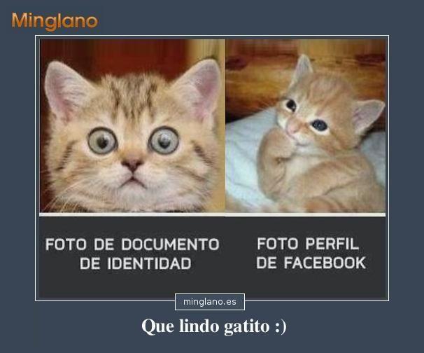 Fotos de gatos con frases graciosas