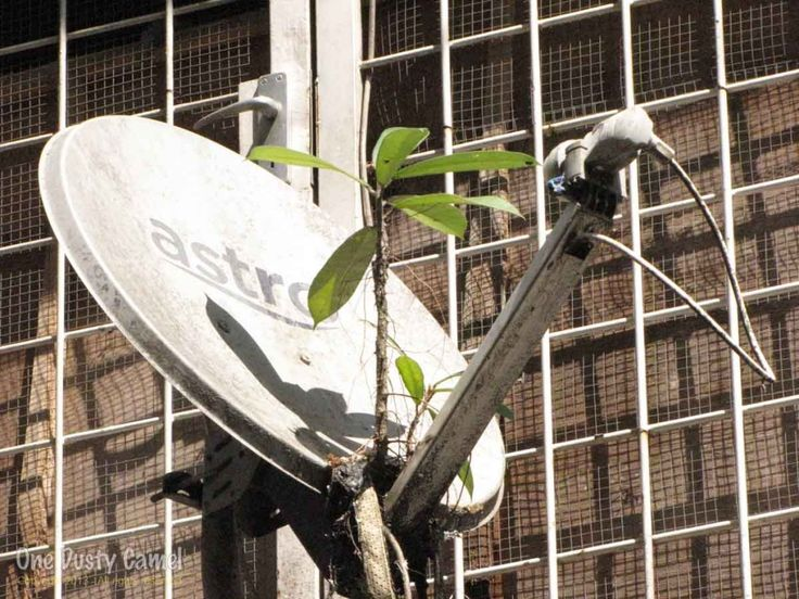 Satellite dish complete with it's own garden in Sandakan, Malaysian Borneo