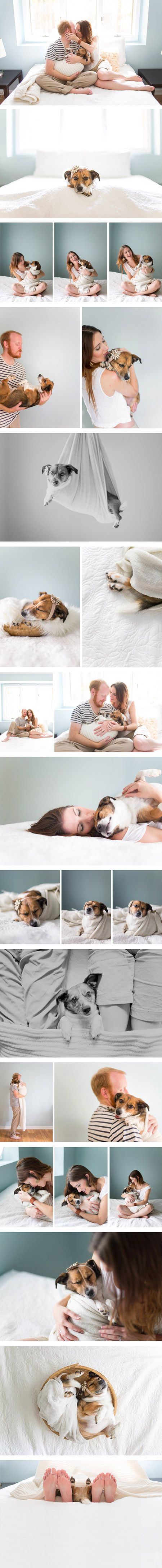 Putting a unique and furry spin on family photos, Huntsville, Alabama-based photographer Jamie Clauss shot a series of humorous and adorable images of her wedding photographer friends Jan and Chase Renegar and their dog in the same style as traditional newborn photography. One day, after admiring a photo shoot that Clauss had done with the family of a newborn baby, Jan remarked that she wished that she could have her own shoot. While she didn't have a baby, she and her husband did have ...