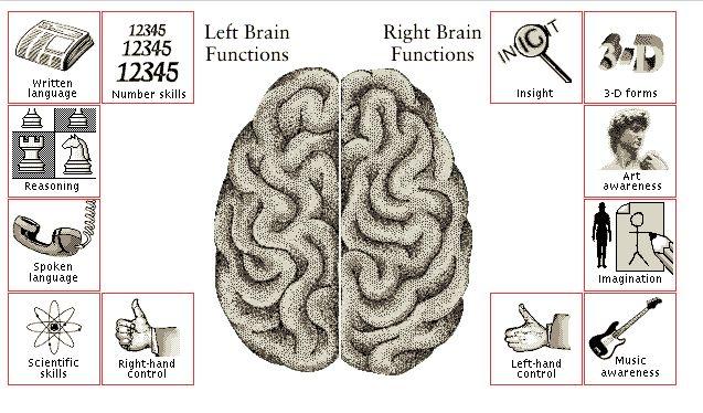 linker-en-rechterhersenhelft