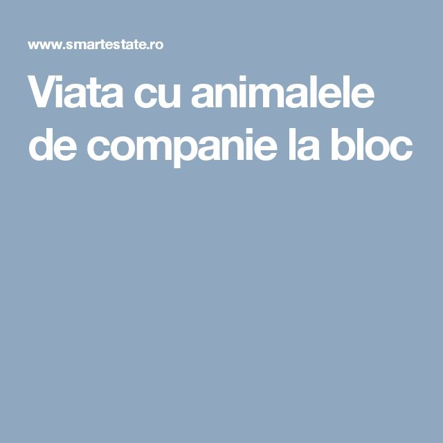 Viata cu animalele de companie la bloc