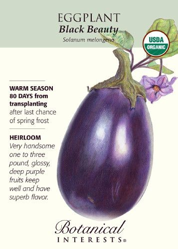 Black Beauty grows three to four very attractive purplish-black fruits on each plant that weigh one to three pounds. With its excellent flavor, there are many reasons to include this beautiful plant i