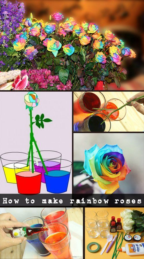 How to make rainbow roses - Natural Garden Ideas