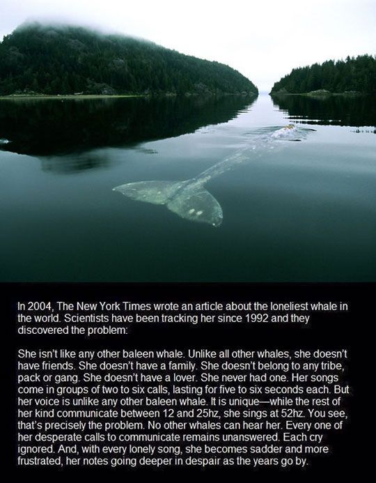 The Loneliest Whale - awesome, so unique but so, so sad she has to be alone...they say there's some one out there for everyone, here's hoping....