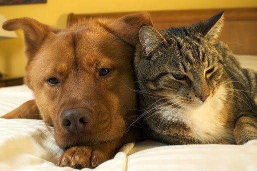Jak opiekować się kotem i psem po kastracji?
