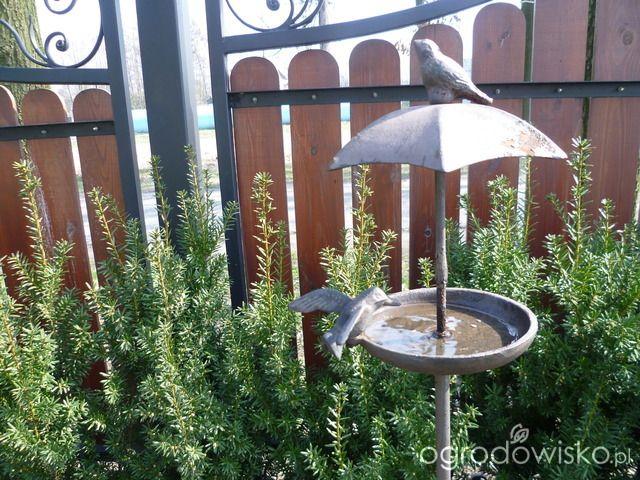 Anulajda w raju - strona 32 - Forum ogrodnicze - Ogrodowisko