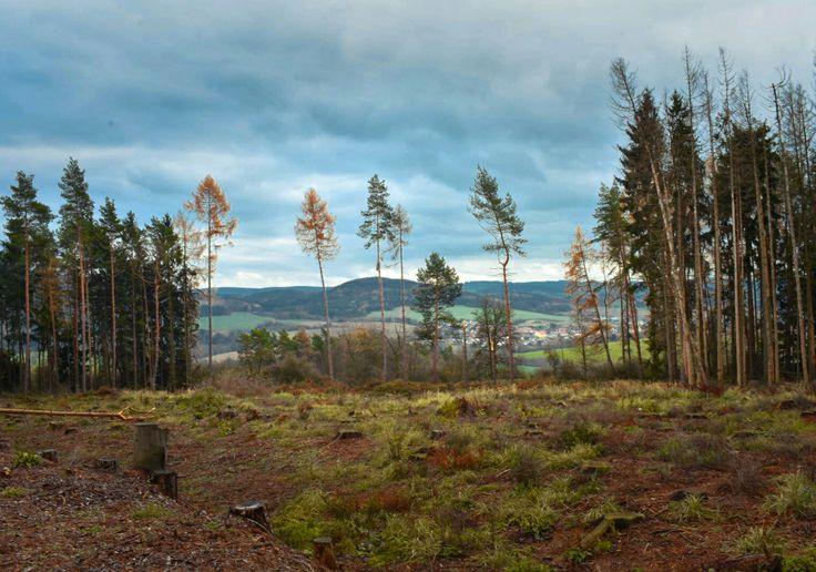 Krajina Landscape Les Forest Autumn Podzim