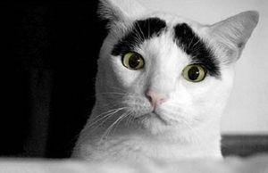 はっち : 猫の模様が可愛すぎる ぱっつん、ザビエル、刺青もん - NAVER まとめ