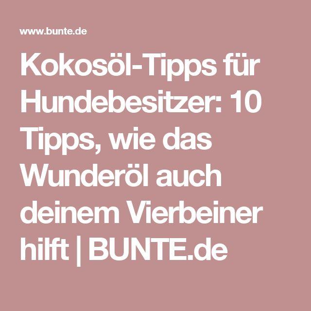 Kokosöl-Tipps für Hundebesitzer: 10 Tipps, wie das Wunderöl auch deinem Vierbeiner hilft | BUNTE.de