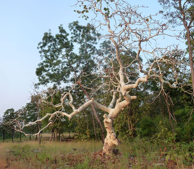 A délkeleti részen egy Karaya nevű fa áll. A lábánál a dél-keleti őr, a tűz istenség,  Agni .