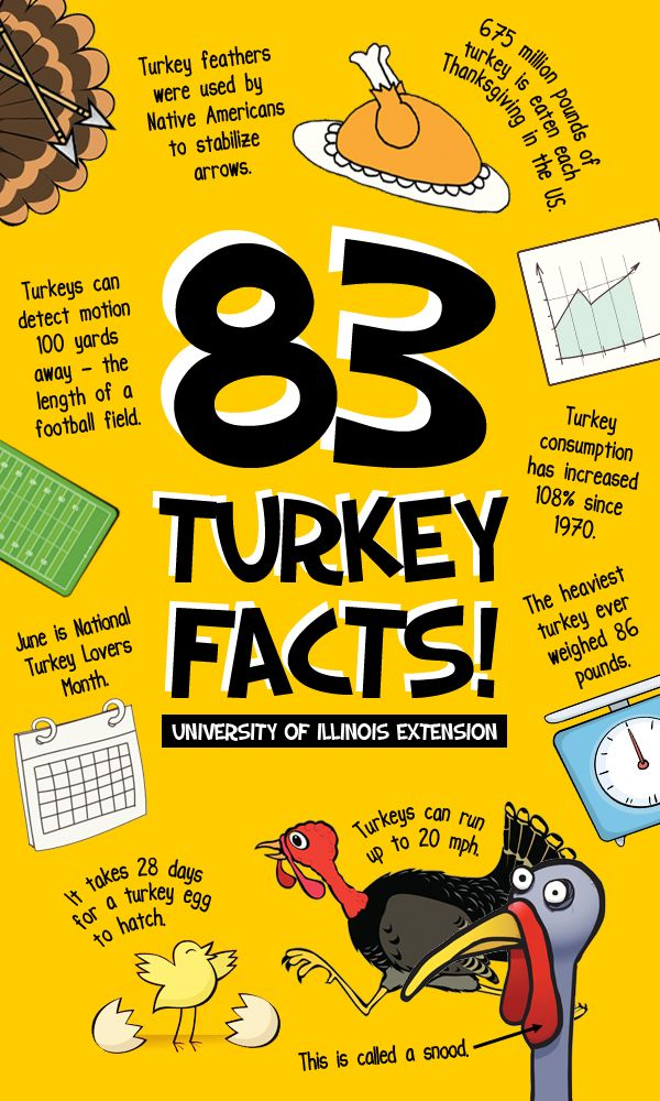 83 Fun Turkey Facts for your amusement this Thanksgiving (Great for the classroom!)