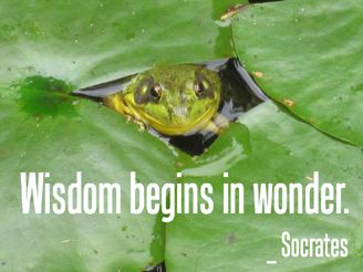 Wisdom begins in wonder.   _ Socrates