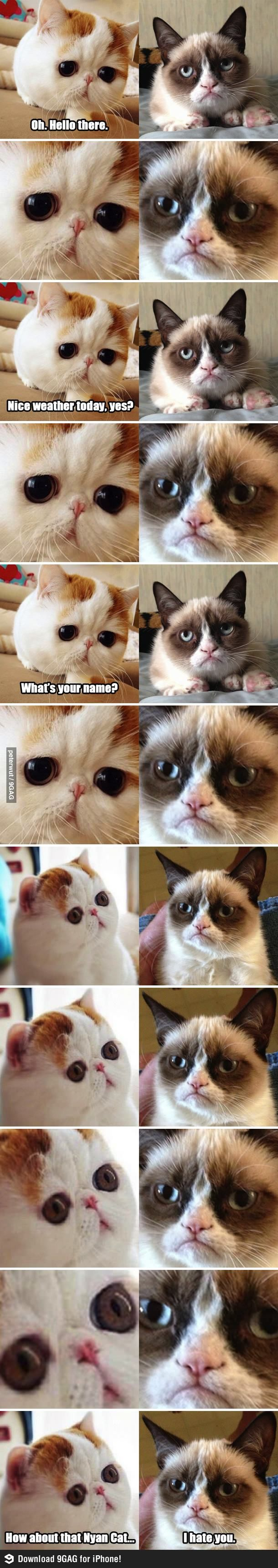 Snoopy vs Grumpy cat