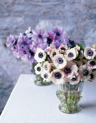 Anemones & Ranunculus