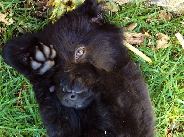 http://dailygeekshow.com/boule-de-poil-chien-peluche-nounours-mignon-ours/