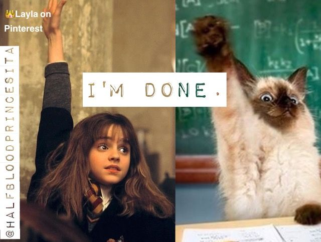 Hermione and a cat