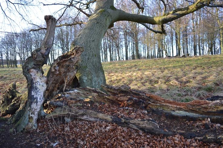 The Deer Park Lyngby