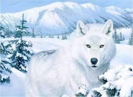Resultado de imagen para lobos blancos